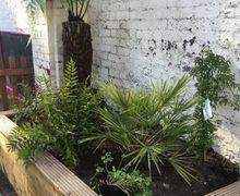 Capture Plants Nursery (2)