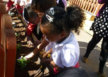Help keep the school fruit and veg scheme in our schools